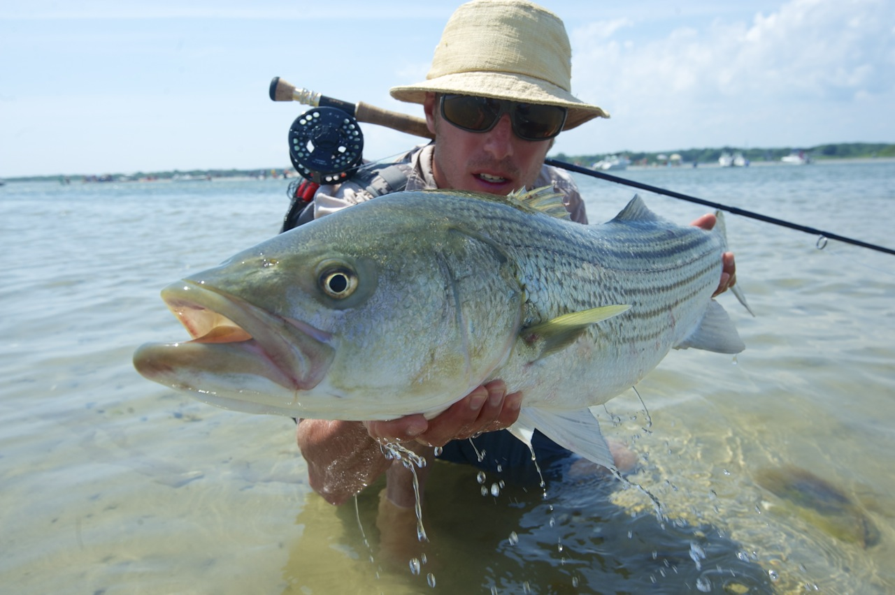 Sight fishing for stripers in rhode island orvis news for Fishing for stripers